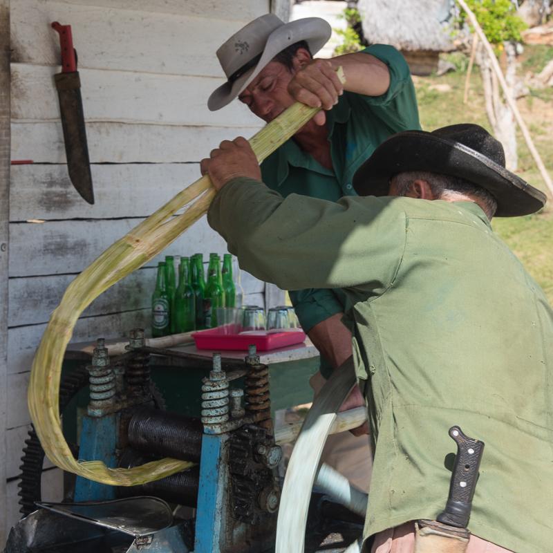 Cuba - Vinales, pressage manuel de la canne à sucre