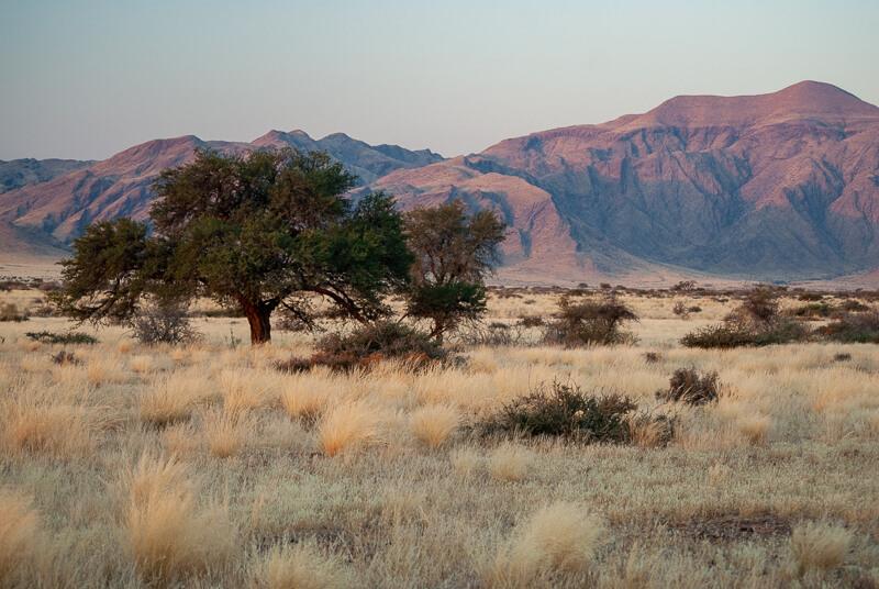 Afrique australe -Namib - Balade au coucher de soleil dans la savane près de Solitaire