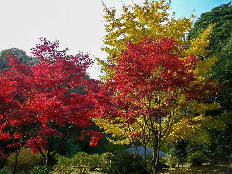 Japon, Kamakura - couleurs d'automne