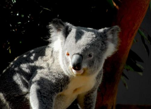 Australie - Zoo de Sydney