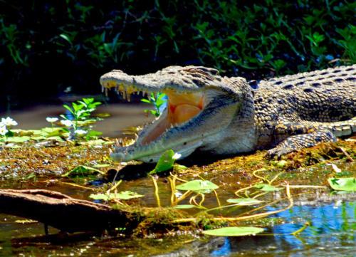 Australie - Parc naturel de Kakadu