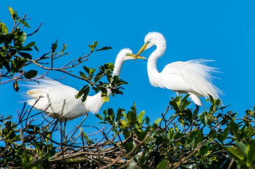 Oiseaux du Guatemala