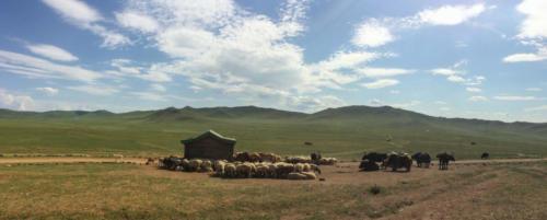 Mongolie, de Oulan Bator à Karakorum