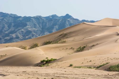 Mongolie, le Gobi