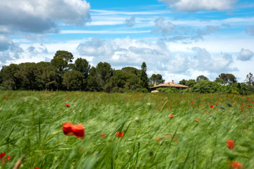Occitanie, Montpellier côté nature