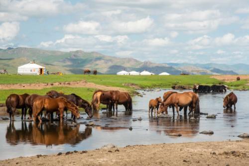 Mongolie, vallée de l'Orkhon