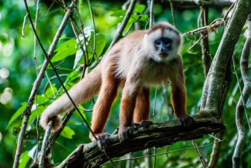Pérou - Amazonie 2