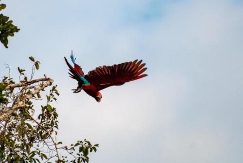 Pérou - Les oiseaux