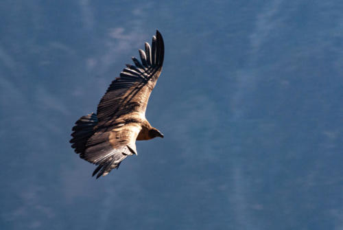 Pérou-Croix du Condor