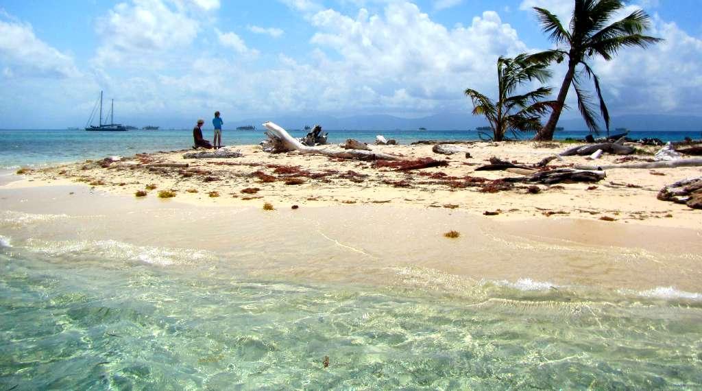 tiny one-palm-tree island san blas, panama