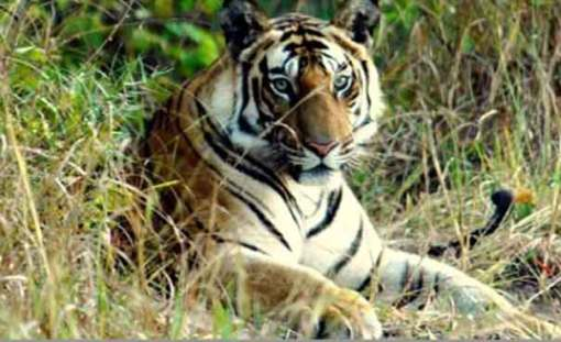Jim's Jungle Retreat, Corbett Tiger Reserve