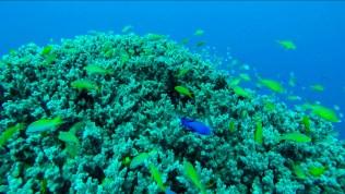 Apo Island 4