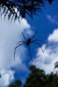 Spider !!