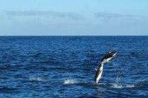 Dolphin Encounter Trip