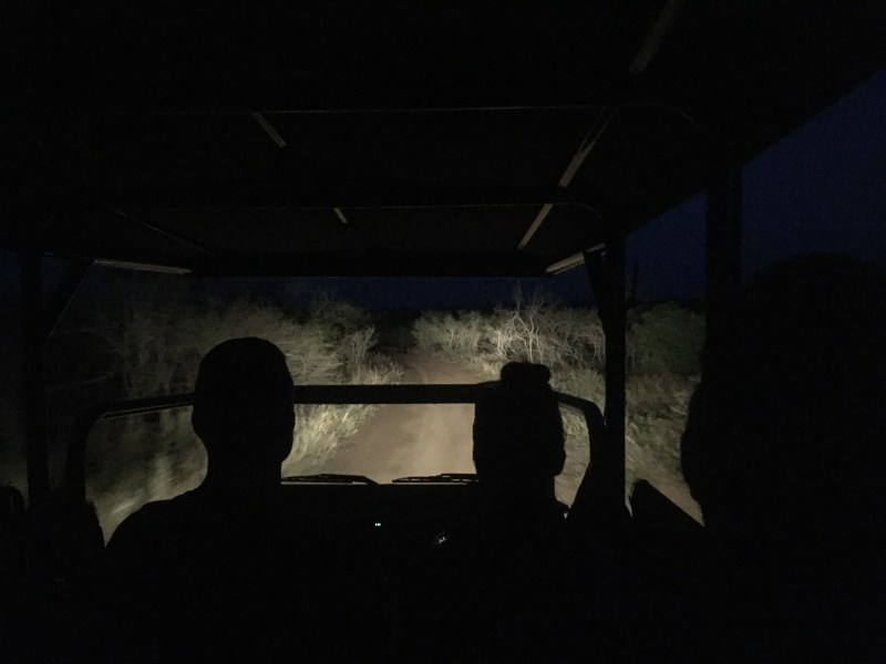 Night drive, Wolhuter Wilderness Trail, Kruger National Park, South Africa