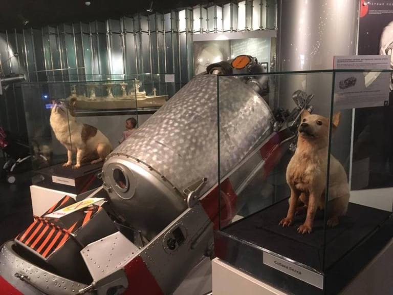 Brave Doggos