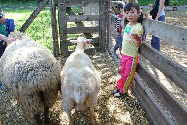Bridgette has always been a bit timid around animals, so she insisted on staying by the gate in the beginning :)