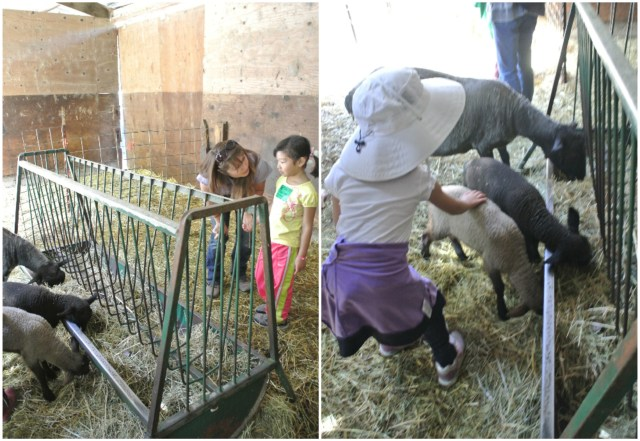Starshine was really good about helping Bridge to become more comfortable around the animals