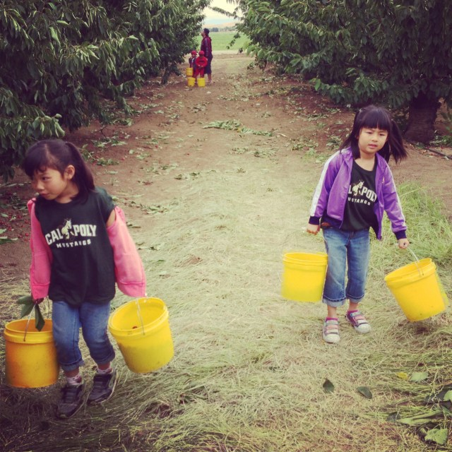 Working hard for their cherries!