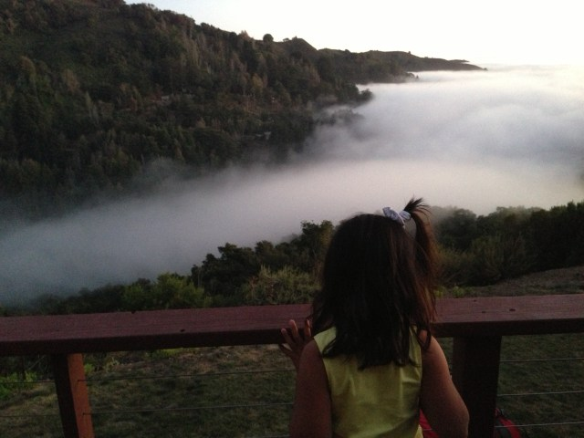 Watching the fog roll in
