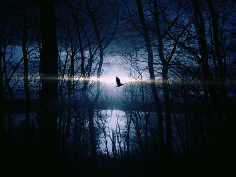 bird-fly-gespentisch-night-53989.jpeg