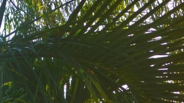 Spot the shy bird ;)