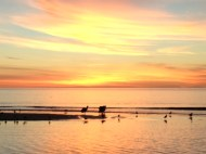 Adelaide Sunset with Pelicans