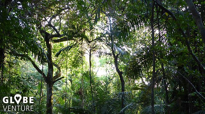 Globeventure - Panama City - Parque Metropolitano