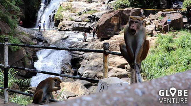 freche Affern tummeln sich rund um dieRavanna Waterfalls