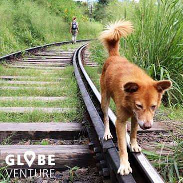Auch andere benutzen die Gleise in Sri Lanka