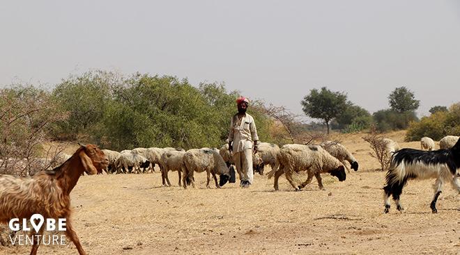 Jaisamlmer, Wüste Thar