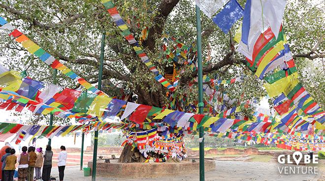 Bodhi Baum Lumbini - Gebetsfahnen