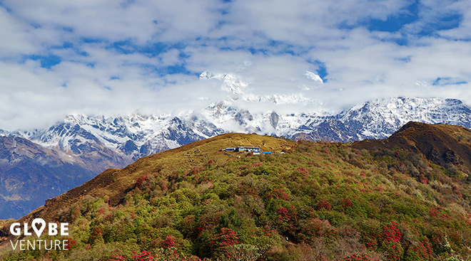 Nepal, Mardi Himal Trek, Rhododendron, Annapurna South