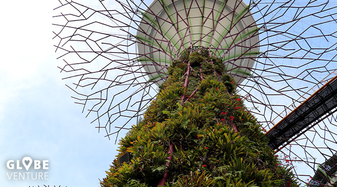 Singapur Garden by the bay supertrees