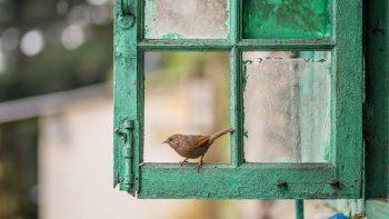 O que significa quando um pássaro atinge sua janela? Significado e simbolismo