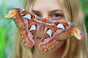 O que significa quando uma mariposa pousa em você? Boa sorte ou azar?