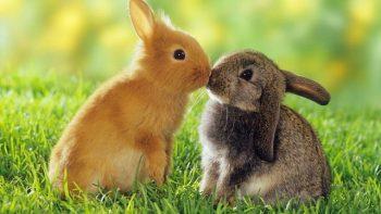 O que significa quando você vê um coelho? 9 significados