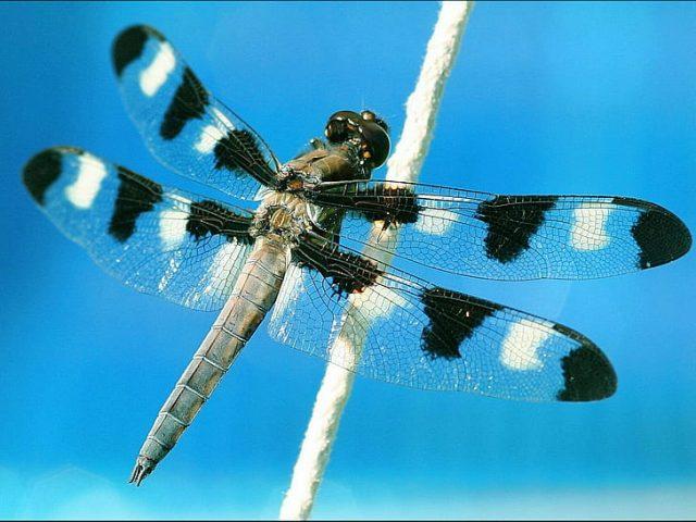 O que significa quando uma libélula pousa em você? 9 significados simbólicos