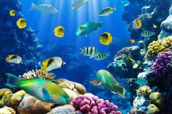 O que significa quando você sonha com peixes?