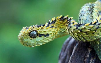 O que significa quando você sonha com cobras? Significado e simbolismo
