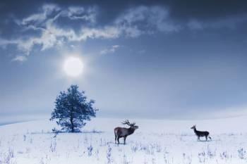Significados do horóscopo e dos signos do zodíaco de 3 de janeiro