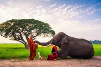 Simbolismo e significado do elefante