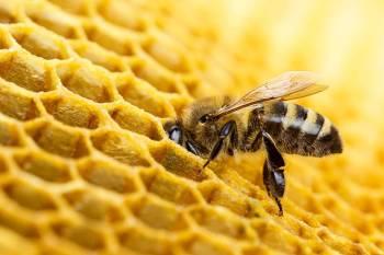 Simbolismo de abelha e significado espiritual