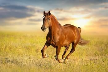 Simbolismo e significado do cavalo