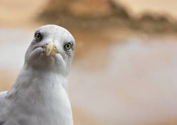 Significado e simbolismo animal do espírito da gaivota