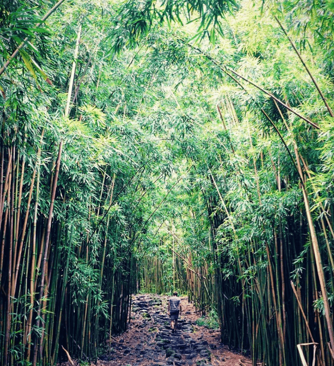 Seven-Sacred Pools Bamboo Forest Hawaii
