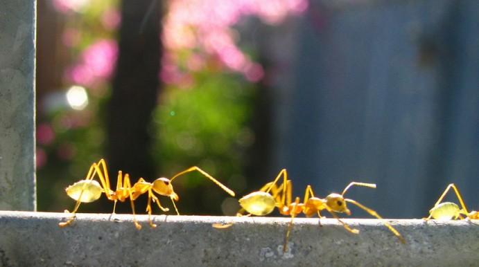 Факты о муравьях для детей