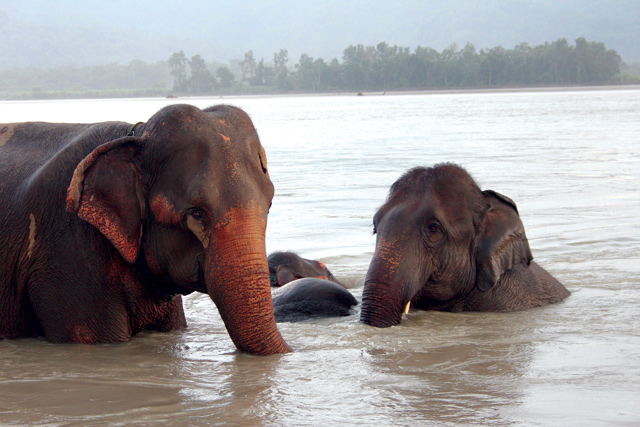 The sight of elephants bathing in the river during a monsoon downpour has a primordial feel.