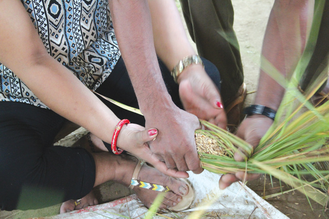 Tourists try their hand at making kuchi, the elephants' favourite snack made of rice, straw and molasses.