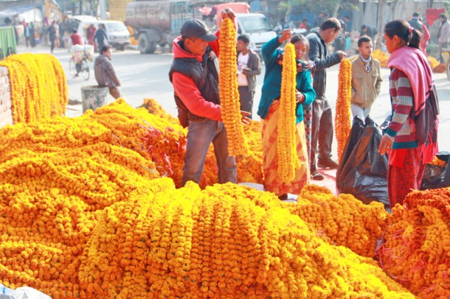 Florists selling marigold flowers in Kalimati of Capital on Tuesday, November 10, 2015. Photo: RSS